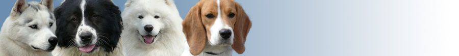 BG Dog Forum.com - Форум за кучета. Породи Кучета - Какво трябва да знаем за кучето - Произход, анатомия, физиология, поведение и др